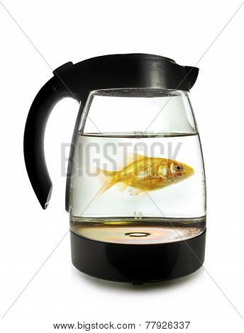 Goldfish Swimming Around In An Electric Kettle On White Background