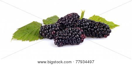 Photo Many Blackberries With Leaves Isolated White