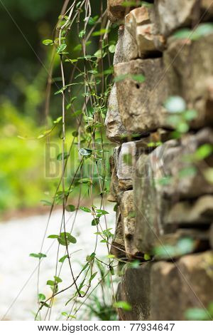 Rock Wall With Vines
