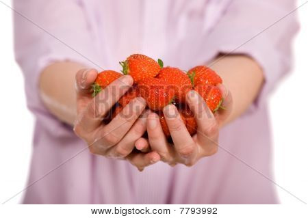Young Female Hands Full Of Strawberries, Isolated On White