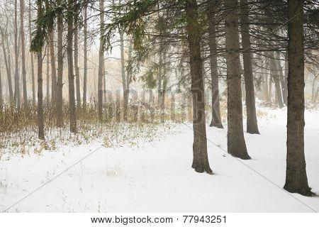 Winter scene in the empty park, tilt-shift lens