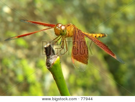 Dragonfly On Trunk