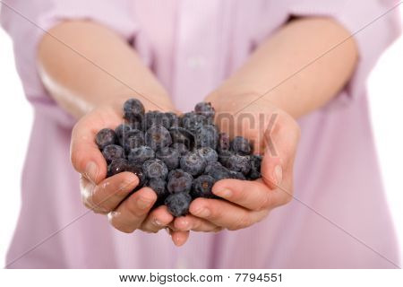 Young Female Hands Full Of Blueberries