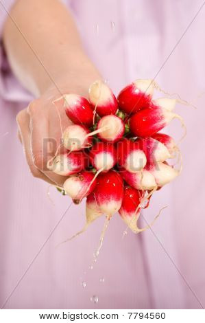 Radish Bunch In Female Hand