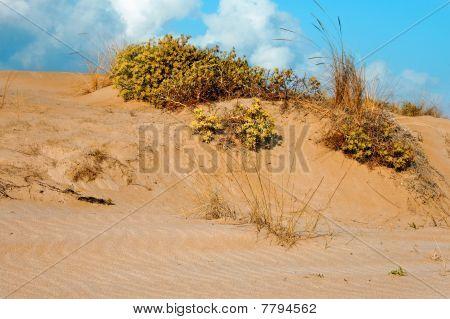 Dune On A Wetland