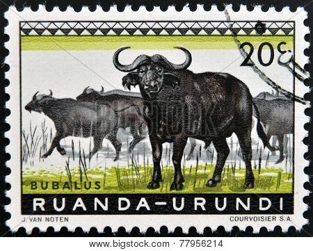 RUANDA - URUNDI - CIRCA 1960: A stamp printed in Ruanda - Urundi shows Bubalus circa 1960