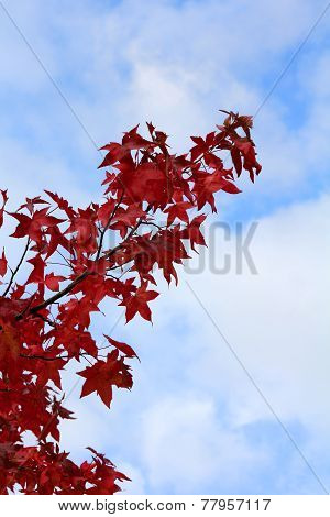 Tree Branch With Autumn Red Leaves