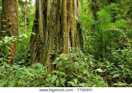 Tree Trunk In Rain Forest