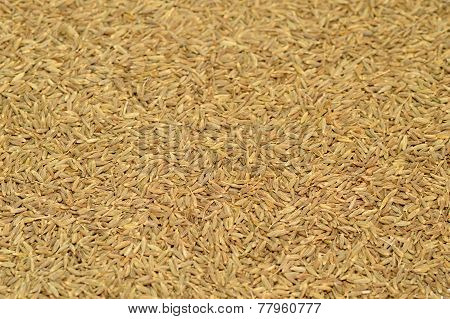 Cumin seeds texture, full frame background. Second most popular spice in the world after black peppe