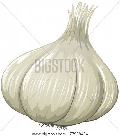 Illustration of a close up garlic
