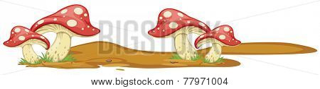 Illustration of mushrooms growing on the ground