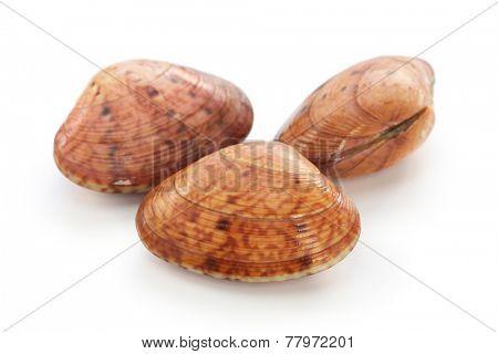 akegai, japanese shellfish isolated on white background