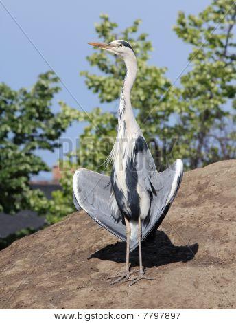 Heron Neck