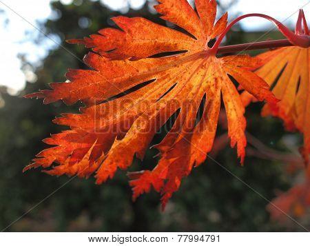 Winter Leaf background