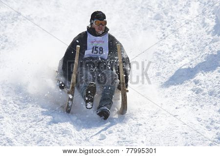 Man rides traditional horn-sledge in Grindelwald, Switzerland.