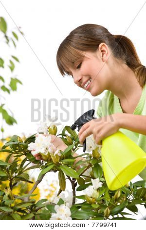 Gardening - Woman Sprinkling Water On Rhododendron Blossom Flower