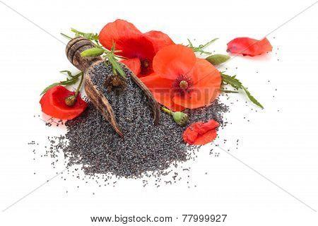 Poppy Seed.