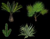 pic of cactus  - illustration with palm trees and cactus isolated on black background - JPG