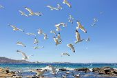 stock photo of swarm  - swarm of sea gulls flying close to the beach of mykonos islandGreece - JPG
