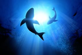 picture of fin  - Under the waves circle two great white sharks - JPG