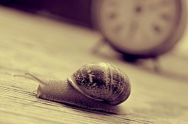 image of garden snail  - a land snail and an old desktop clock on a wooden table - JPG