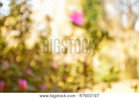 Defocused Spring Flower Garden Background