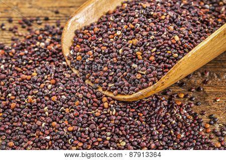 healthy, gluten free, black quinoa grain on a rustic wooden scoop