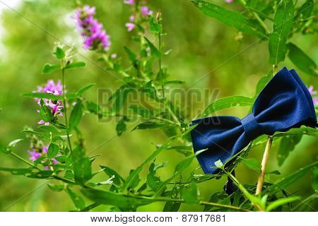 Bowtie Hanging In The Nature From A Purple Flower