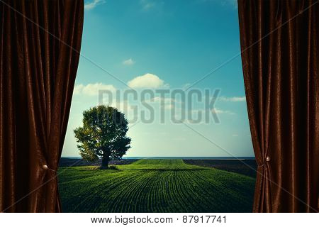 Agricultural Landscape With Tree Behind Curtain