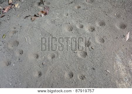 The Pit Of Sand Antlion