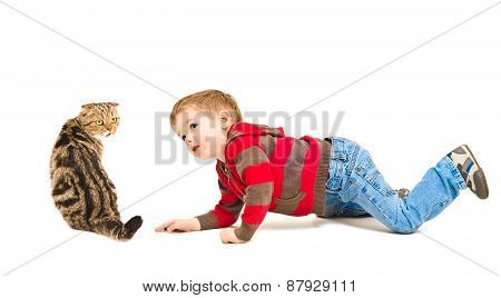 Cute boy looking at Scottish Fold cat