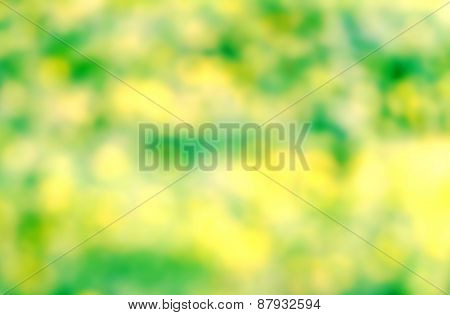 Natural Spring Or Summer Green And Yellow Sun Beam  Background With Abstract Defocused Light