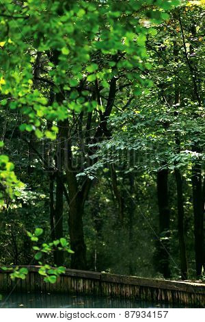 Wild Dense Mysterious Forest, Bokeh Of Greens Leaves A Trees