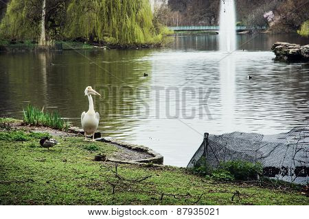 Beautiful St. James's Park Scene