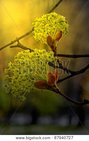 Flowers On Twigs In Sunset Light