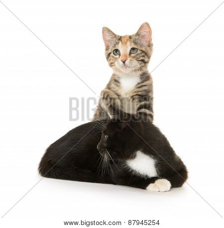 Two Cats On Whtie