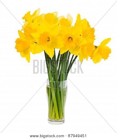 Bouquet Of Fresh Spring Narcissus Isolated Over White