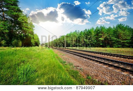 Railroad and pine forest