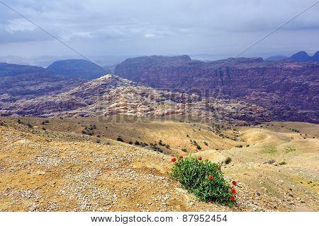 Jordanian Landscape