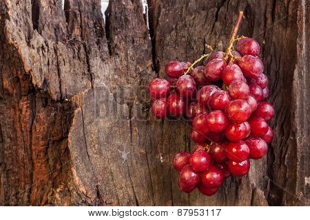 Red Grapes Hang On Log
