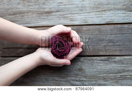 Dried Rose In Hands