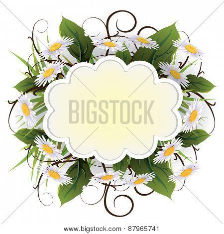 Beautyful camomiles design. Vector of summer background