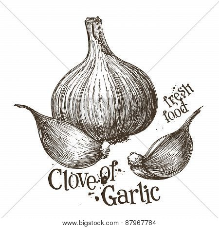 garlic vector logo design template. fresh vegetables, food or cooking icon.