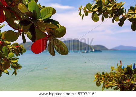 Bright colorful picture coast