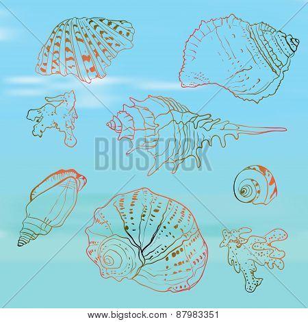 Seashells set on the blurred background, vector illustration