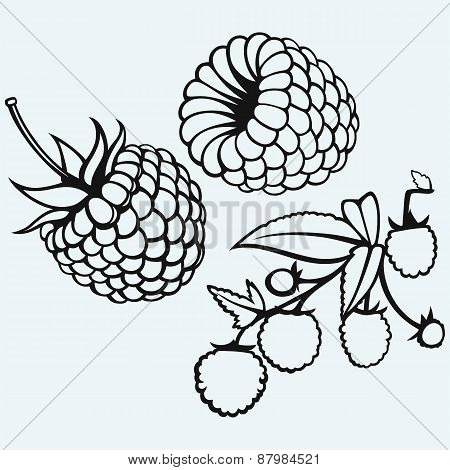 Ripe raspberry with leaf