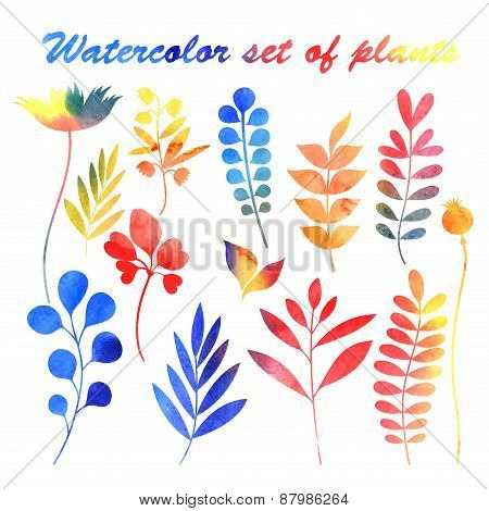 Watercolor Set Of Plants