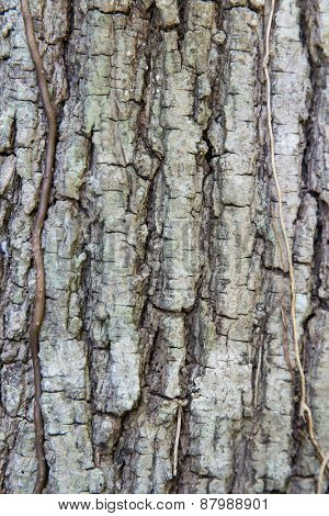 background and texture concept - tree trunk bark