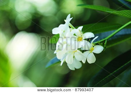 Fresh flowers over green leaves, closeup
