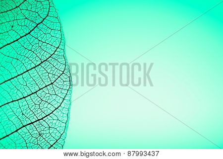 Skeleton leaf on green background, close up